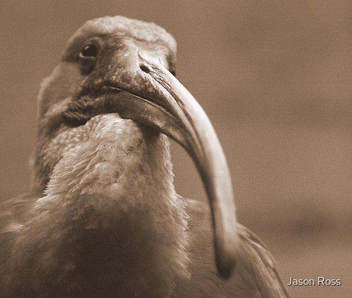 Birdie by Jason Ross