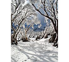 Snowgums Photographic Print