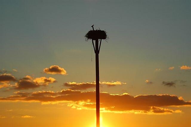 Sunset Hawks nest by Brennen Cole