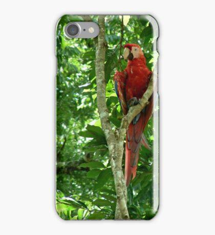 Macaw iPhone Case/Skin
