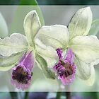 Merged Orchid # 4 by Ann Williams-Fitzgerald