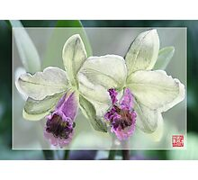 Merged Orchid # 4 Photographic Print