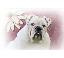 White English Bulldog with Flower Photographic Print