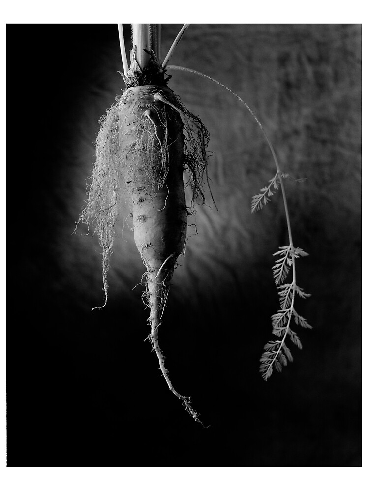The Carrot by Jeff Moorfoot