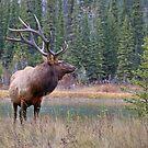 Nice Bull along the Bow by JamesA1