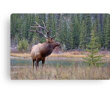 Nice Bull along the Bow Canvas Print