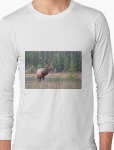 Nice Bull along the Bow Long Sleeve T-Shirt