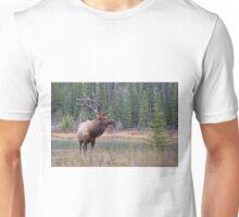 Nice Bull along the Bow Unisex T-Shirt
