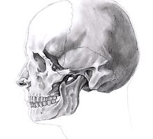 Human Skull by wyvex