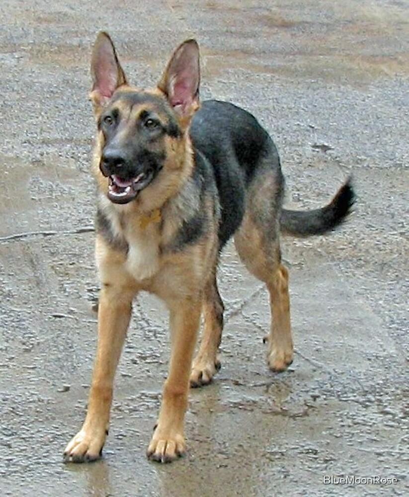 A Dog Called Sheba by BlueMoonRose