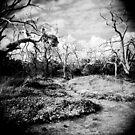 The Faraway Holga by Rhys Allen