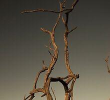 Dead Tree by Tim Burder