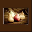 Selection of juicy pears photo  by Kell Rowe
