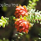 Happy New Year! - Australian Nature #1 by Kell Rowe