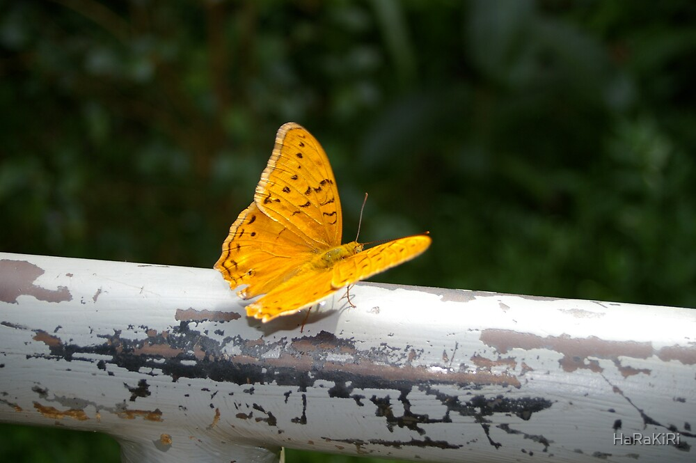 Butterfly by HaRaKiRi