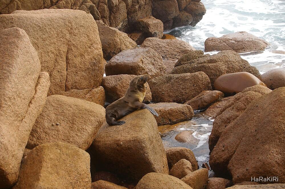Seal by the Water by HaRaKiRi