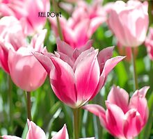 Pink Tulips - iPhone case by Kell Rowe