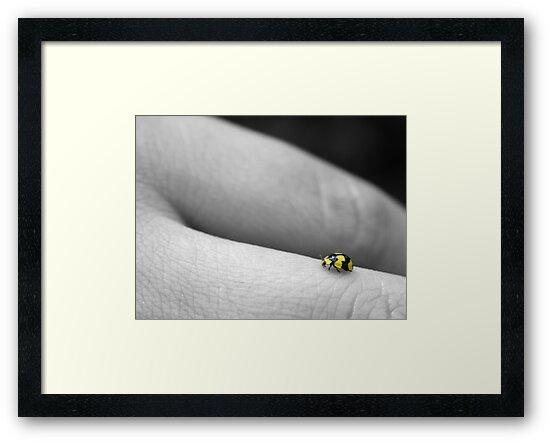 Ladybird by Spoungeworthy