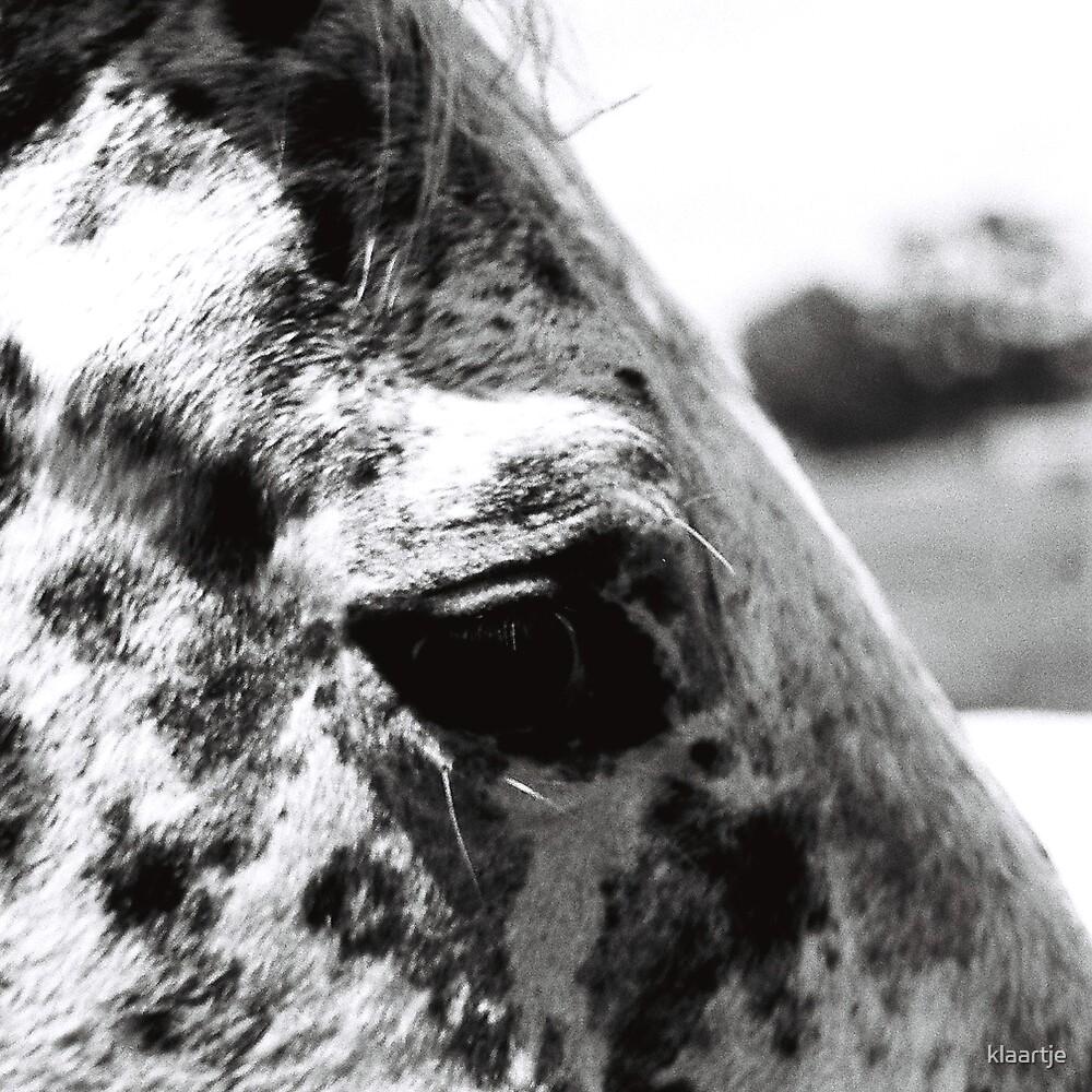 B/W Horse 1/3 by klaartje