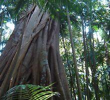 Rainforest by Lara Stephenson
