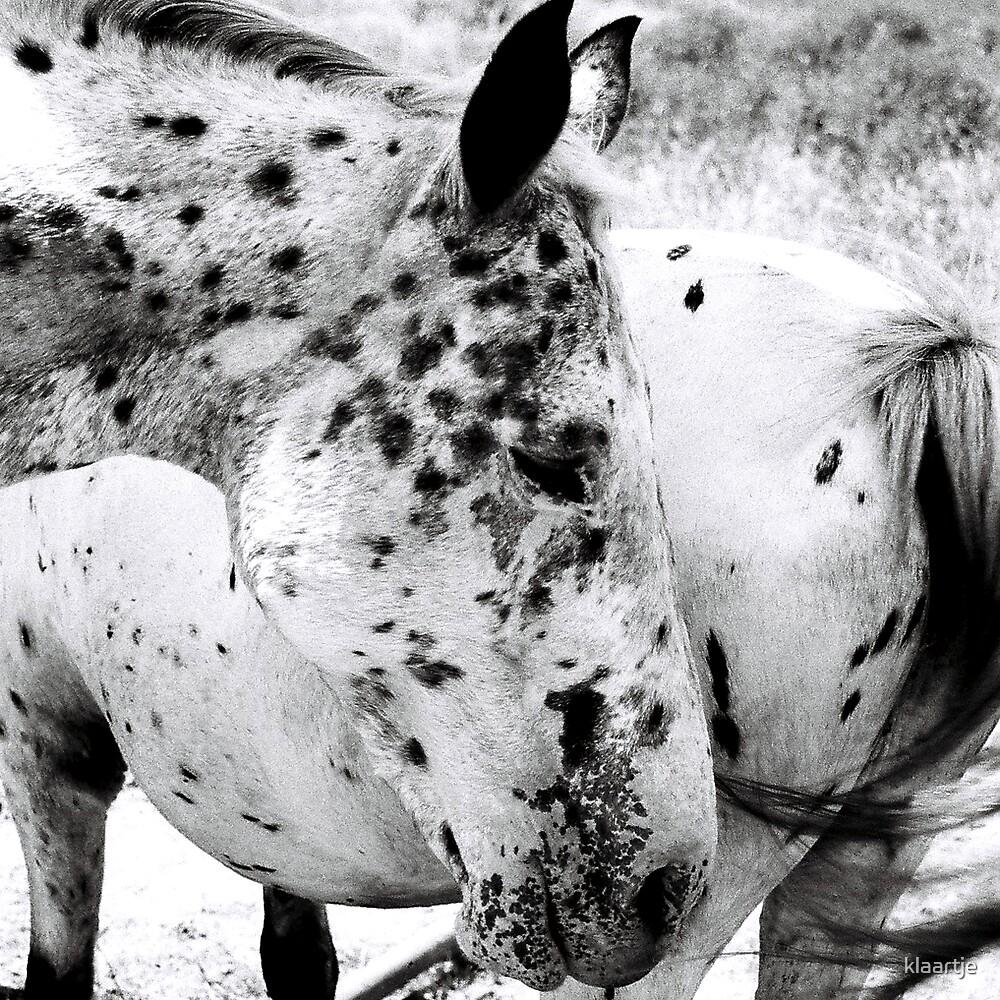 B/W Horse 3/3 by klaartje