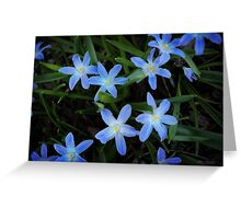 Scilla Flowers In The Morning Greeting Card