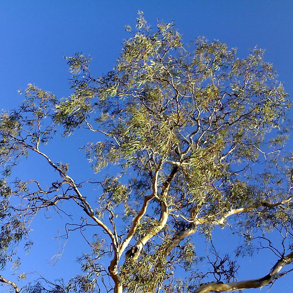 Tree Blue by J K Scott