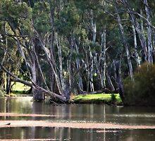 River Scene at Gunbower near Cohuna by Lozzar Landscape