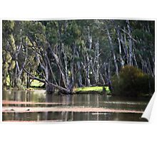 River Scene at Gunbower near Cohuna Poster