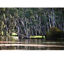 River Scene at Gunbower near Cohuna Photographic Print