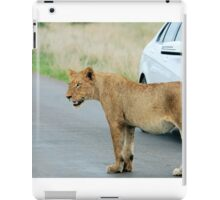 AND THEN ALL WINDOWS WERE CLOSED - THE LION – Panthera leo iPad Case/Skin
