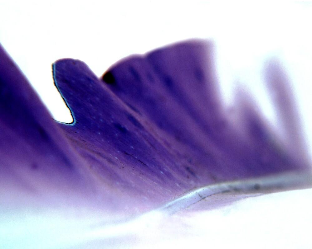 Purple Wave by Rob Stagnitta