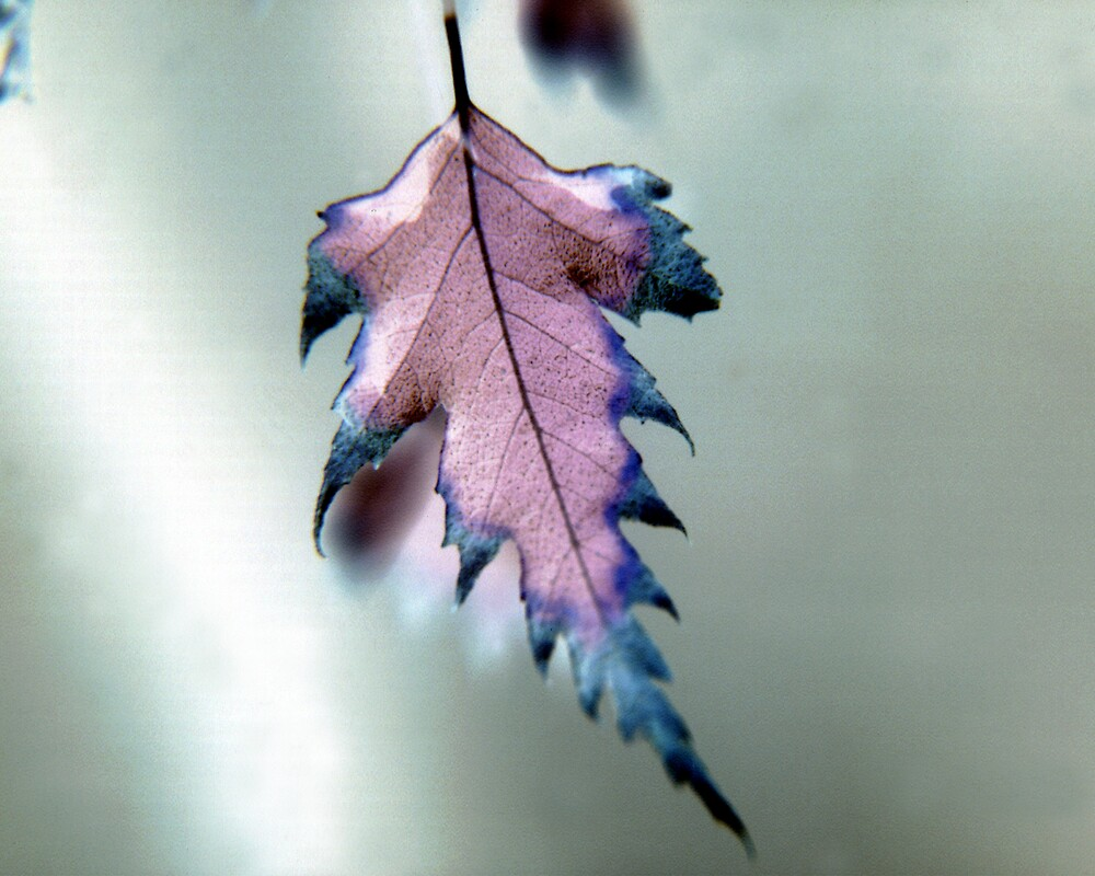 The Purple Leaf by Rob Stagnitta