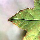 The Green Leaf by Rob Stagnitta