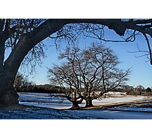 Cherry Trees in Winter Photographic Print