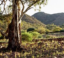 untitled, Flinders Ranges by mgimagery