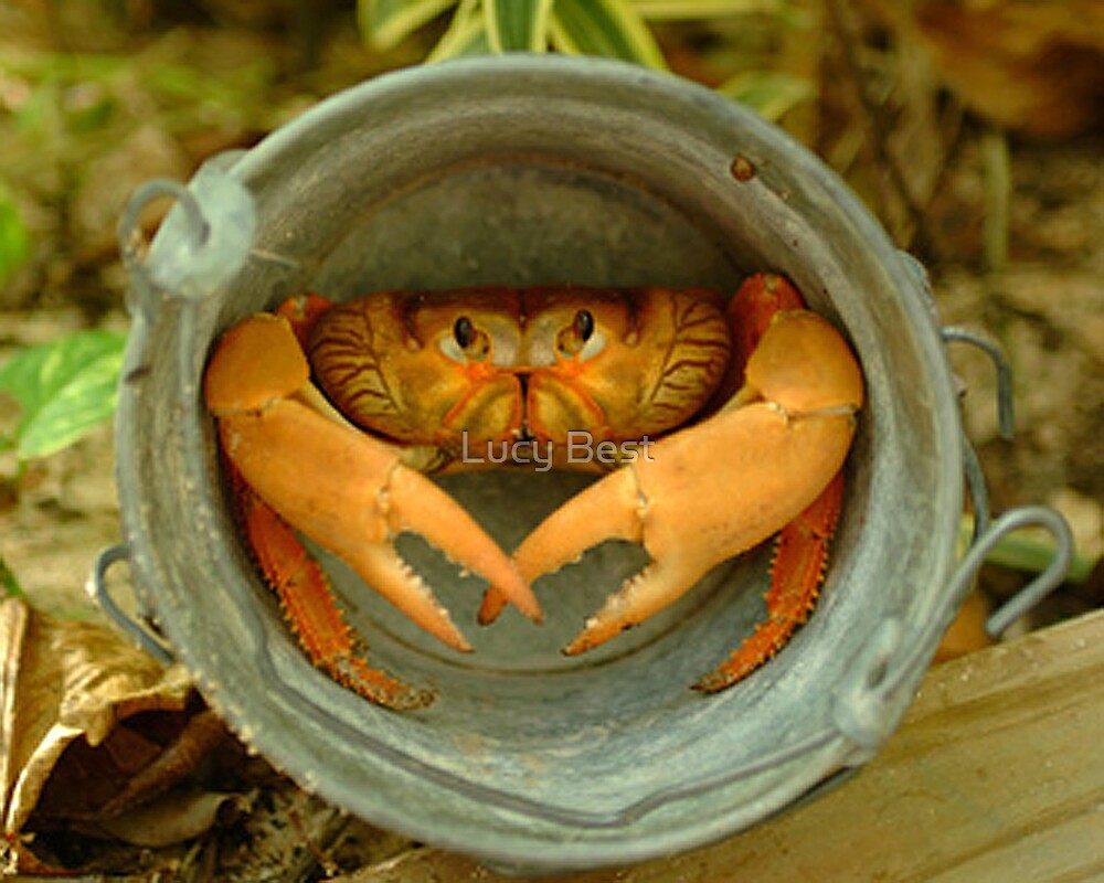 Land Crab by Lucy Best