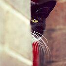 Cat's eye by Craig Watson