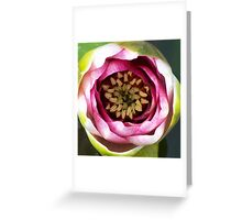 Closeup of a waterlilly flower in our front garden Greeting Card