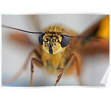 Moth Macro Poster