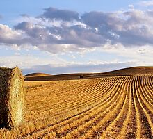 Bale & Field, Vinegar Hills by mgimagery