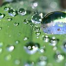 Grass Droplets by Mark Snelson