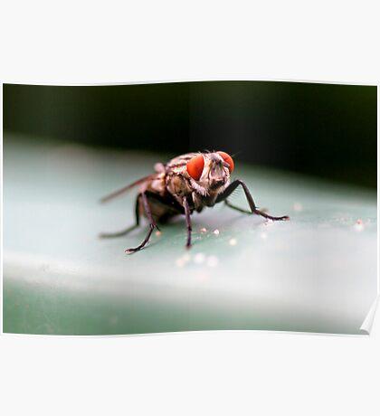 Flesh Fly Poster