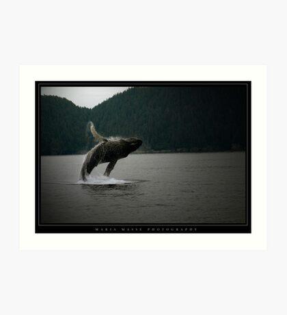 Humpback Whale - Alaska Art Print