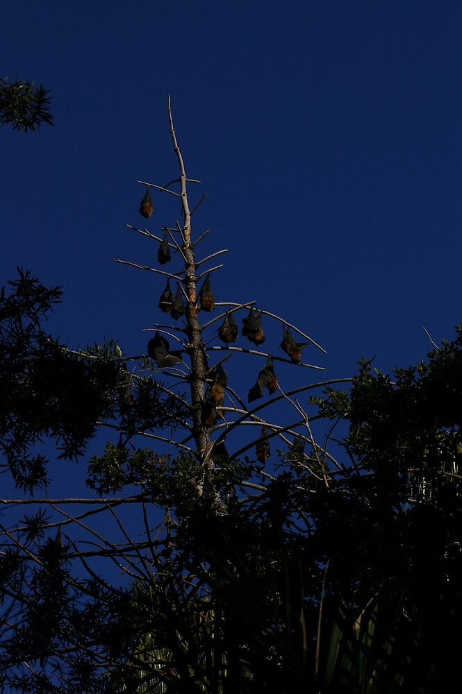 Bats by joesch