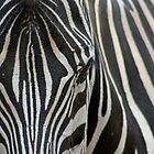 Zebra Stripes by Mark Snelson