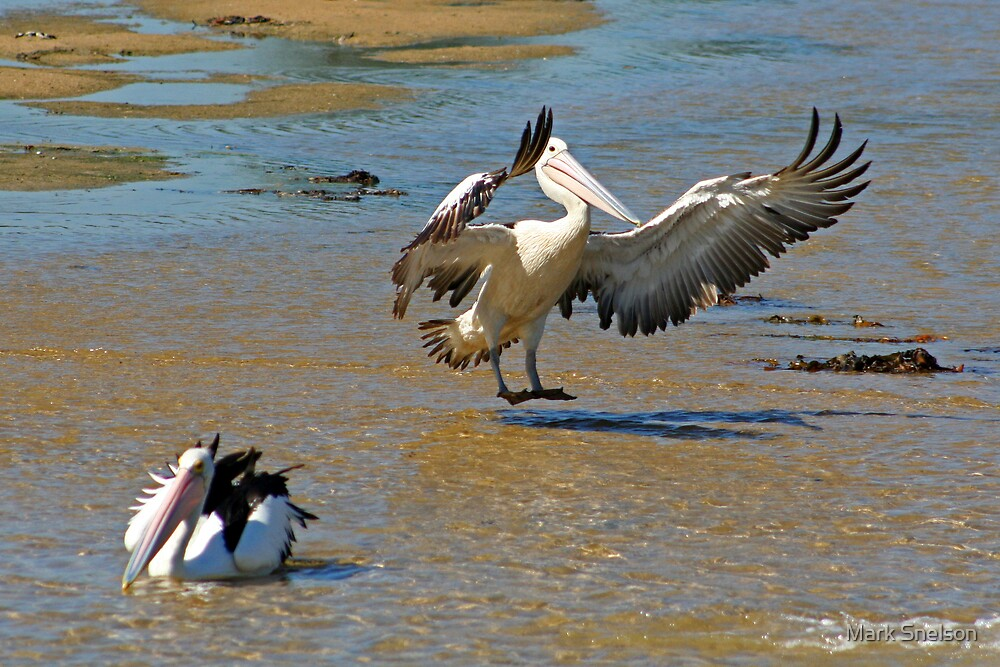 Pelican Landing by Mark Snelson