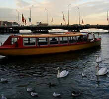 Swans on the Rhône by Akira