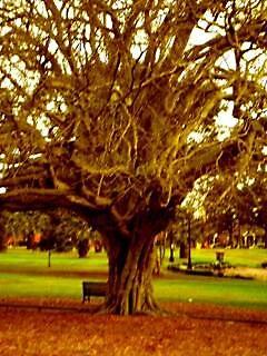 arbre by mani wichman
