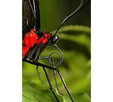 Tropical Butterfly Macro Photographic Print
